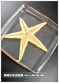菜鳥 七年級:【生物課】海星標本
