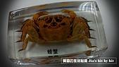 菜鳥 七年級:【生物課】螃蟹標本