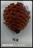 菜鳥 七年級:【生物課】松果標本