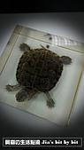菜鳥 七年級:【生物課】烏龜活體標本