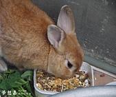遇見來福, Rabbit Lai-Fu:DSCN5506.JPG