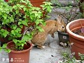 遇見來福, Rabbit Lai-Fu:DSCI08399.JPG