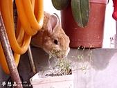 遇見來福, Rabbit Lai-Fu:DSCI0796.JPG