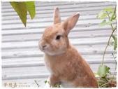 遇見來福, Rabbit Lai-Fu:DSCN5410.jpg