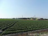 鄉村風情:P10604580.JPG