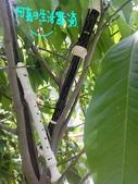 菜鳥 七年級:直笛與大自然的結合~