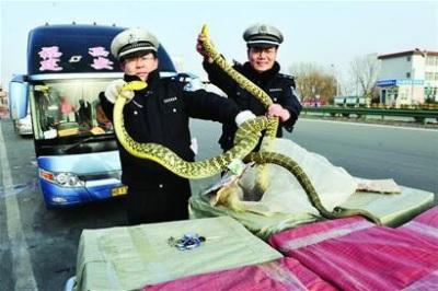 「乘客坐28箱蛇上」嘶嘶聲響嚇壞一車人