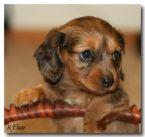 可愛小狗:可愛小狗-16