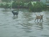 台南旅-莫拉克颱風→安南區:淹水-8