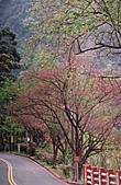 芬多精之旅:櫻花盛開