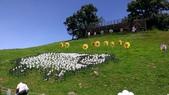 清境農場之旅:清境農場-風車節