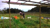 2015年雙連埤【野香園】農作:P_20150207_134141.jpg