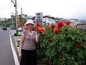 清境農場二日遊:路邊的花