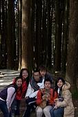 阿里山三日遊:神木區步道