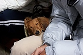 阿里山三日遊:睡著的小米─超好命!