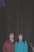 阿里山三日遊:二千歲的鹿林神木─全台第二大