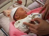 楷航誕生:小小的手