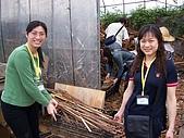 大溪之旅:搬木柴