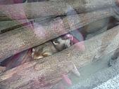 99-06-05 週末優閒逛動物園:照片 261.jp