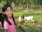 99-06-05 週末優閒逛動物園:照片 266.jp