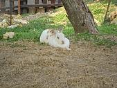 99-06-05 週末優閒逛動物園:照片 267.jp