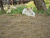 99-06-05 週末優閒逛動物園:照片 268.jp