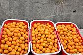 100-04-09 四訪美濃採橙蜜香和再訪金色三麥:照片 014.jp