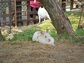 99-06-05 週末優閒逛動物園:照片 269.jp