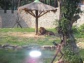 99-06-05 週末優閒逛動物園:照片 270.jp