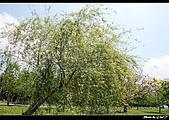 2009-04-11南庄老街.好望角:DSC_6959.jpg