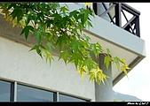 2009-04-11南庄老街.好望角:DSC_6974.jpg