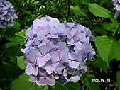 2006 立山黑部,合掌村,馬籠宿:PICT0073.JPG
