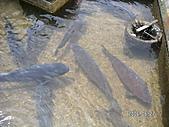 2006 立山黑部,合掌村,馬籠宿:PICT0025.JPG