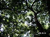 2006 立山黑部,合掌村,馬籠宿:PICT0023.JPG