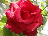 玫瑰與花:DSC03917.JPG
