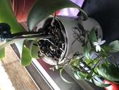 玫瑰與花:IMG_3137.JPG