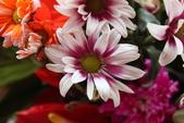 玫瑰與花:花1.jpg