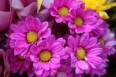 玫瑰與花:花3.jpg