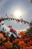 太陽光環~日暈:IMG_9214日暈.JPG