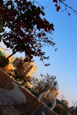 公園~試拍:IMG_8694.JPG