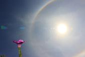 太陽光環~日暈:IMG_8978 日暈.JPG