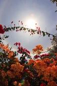 太陽光環~日暈:IMG_9207日暈.JPG