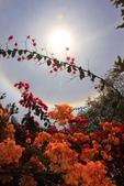 太陽光環~日暈:IMG_9213日暈.JPG