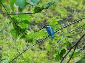 生態世界:2月13日鳥松溼地 4