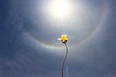 太陽光環~日暈:IMG_9741 日暈.JPG