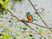 生態世界:2月13日鳥松溼地 1