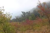 山河變色:IMG_6628.JPG