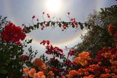 太陽光環~日暈:IMG_9212日暈.JPG