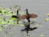 生態世界:鳥松溼地 1