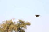公園~試拍:燕